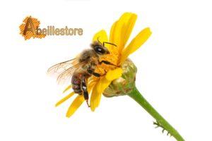 abeille store
