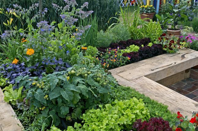 Aménagement d'un jardin potager mixte