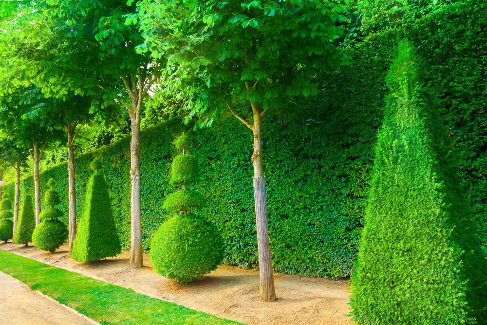 Arbre topiaire pour jardin moderne