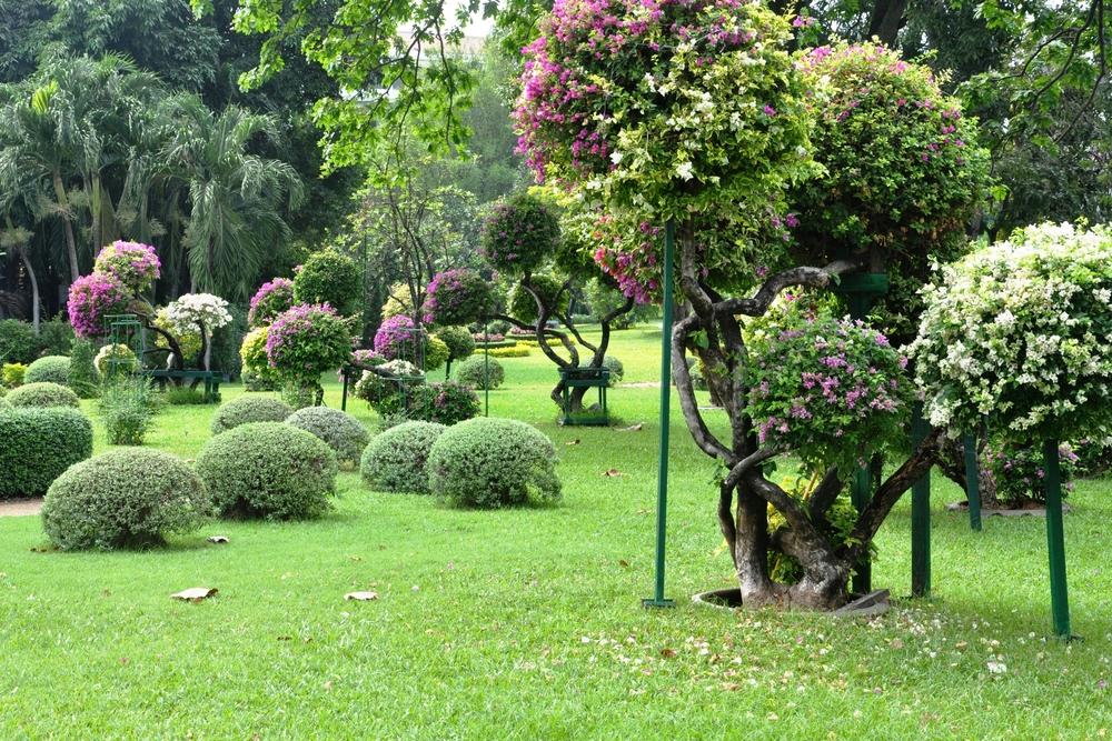 Exemples d'arbres d'ornement pour jardin