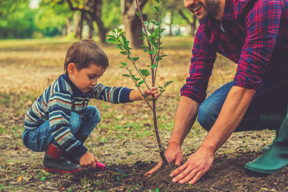 Planter un arbre au jardin
