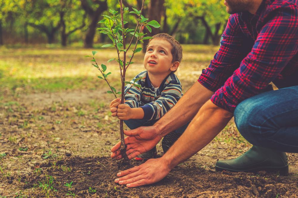 Comment planter un arbre dans le jardin