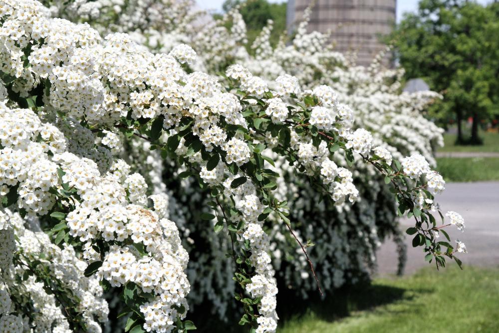 Quels arbustes et haies planter dans son jardin ? Nos ...