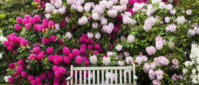 Jardin de Rhododendron