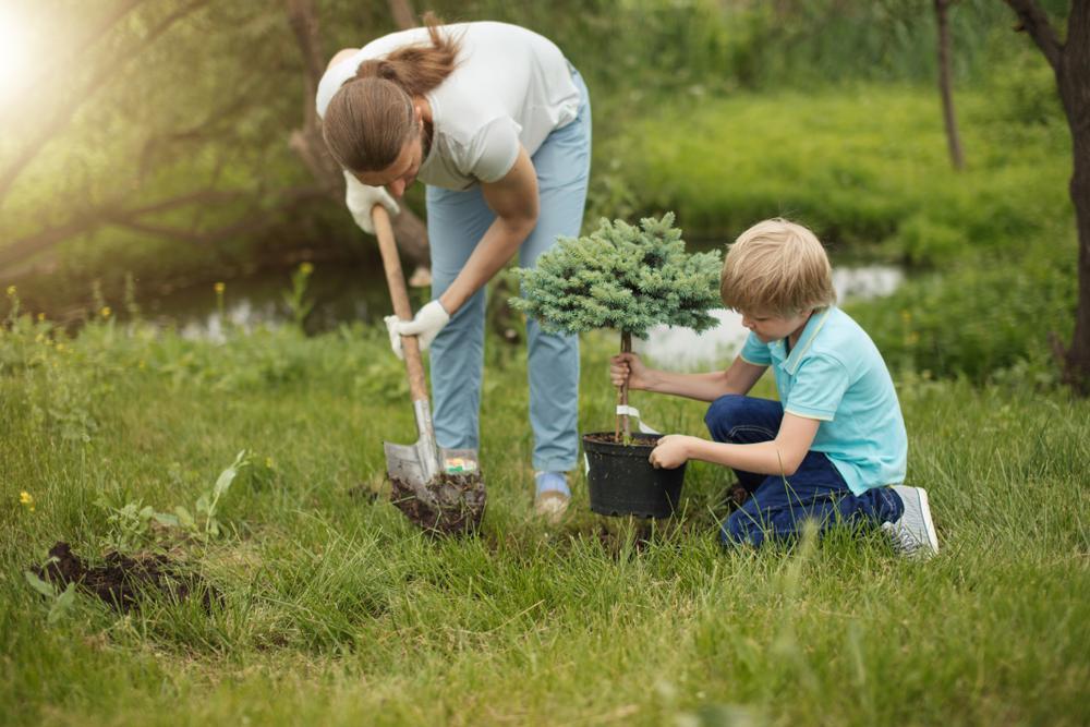 Arbre nain d'ornement pour le jardin