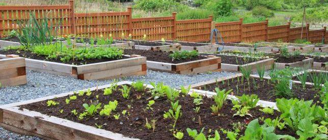 Organisation d'un jardin potager