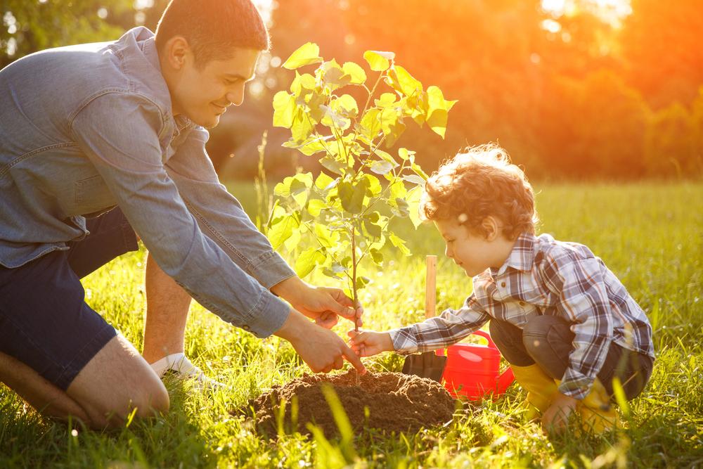 Planter un arbre de jardin (Ginkgo Biloba)