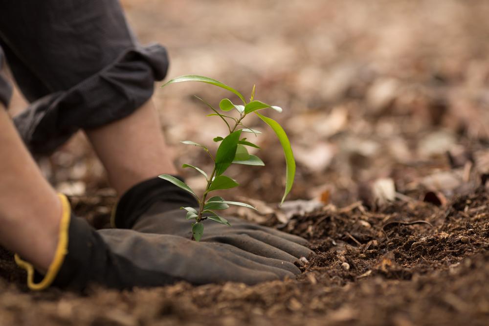 Préparation du sol pour recevoir un arbre