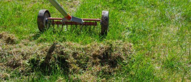 Aérer la pelouse avec un scarificateur pour enlever les mauvaises herbes