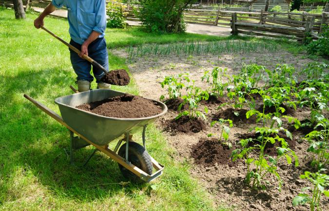 Ajout de compost au potager