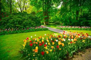 Allee de tulipes