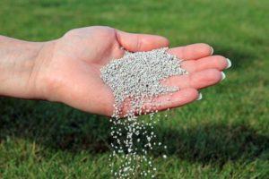 Apport d'engrais à la pelouse