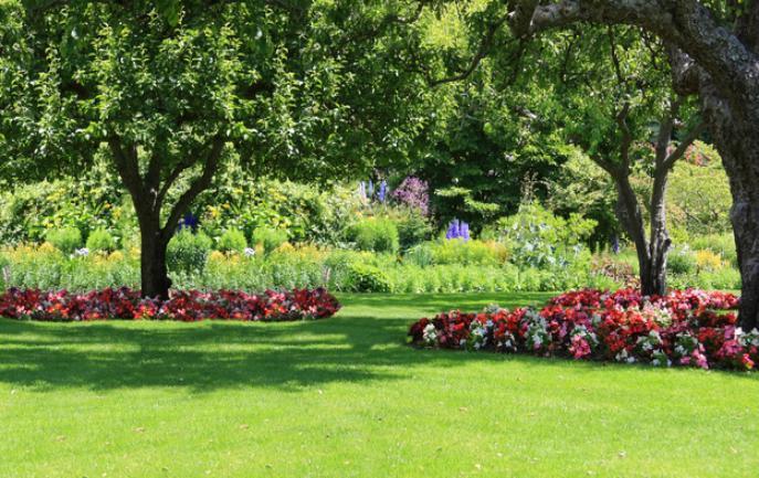Belle pelouse dans un espace vert