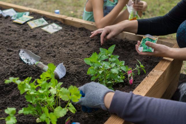 Bien choisir les légumes à planter