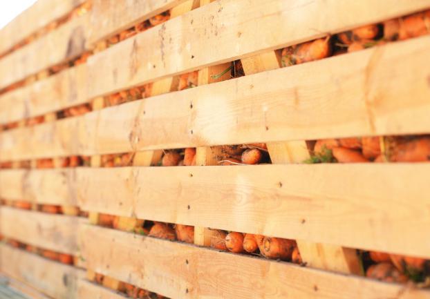 Carottes empilées dans des caissons en bois