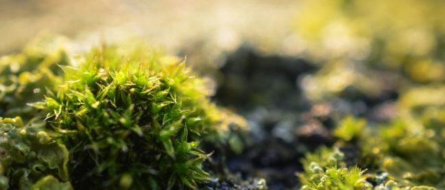 Cendre versé sur la mousse de la pelouse