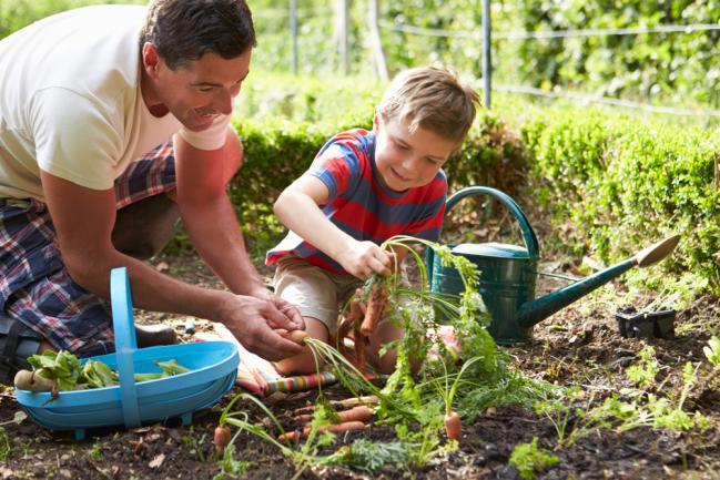Choisir et planter des carottes