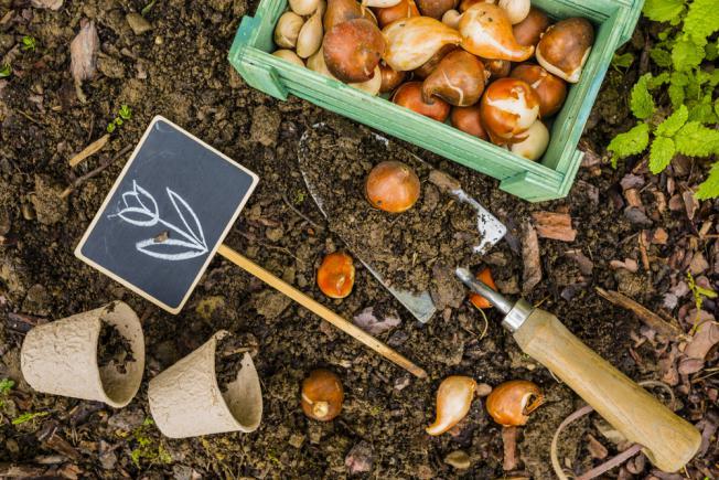 Comment planter les bulbes d'iris dans le jardin