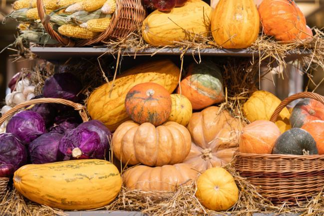 Conservation des citrouilles et courges récoltées en automne
