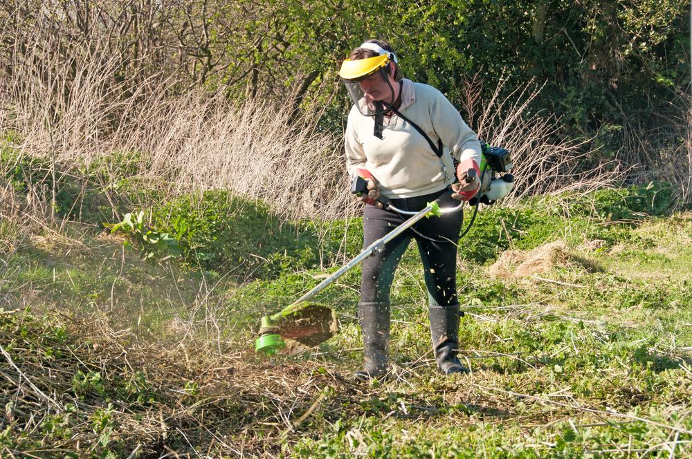 Petits travaux de jardinage Saujon (17 )