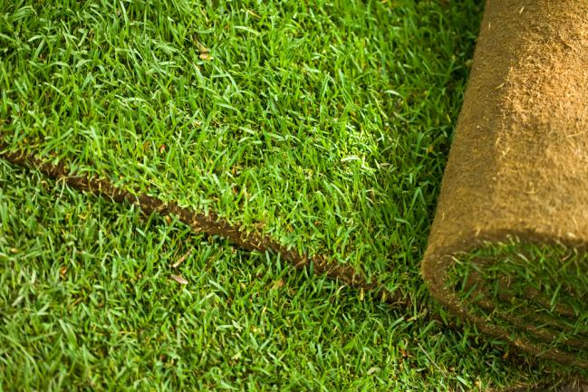 Déroulage gazon pour pelouse en plaques