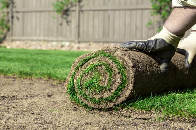 Dérouler un gazon pour une nouvelle pelouse en plaques
