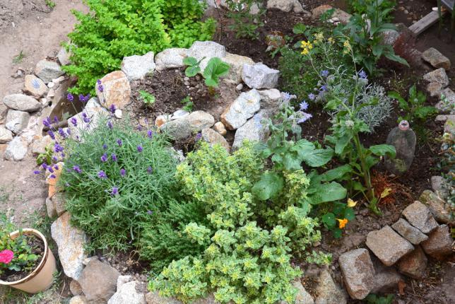 Élément de permaculture spirale de plantes aromatiques