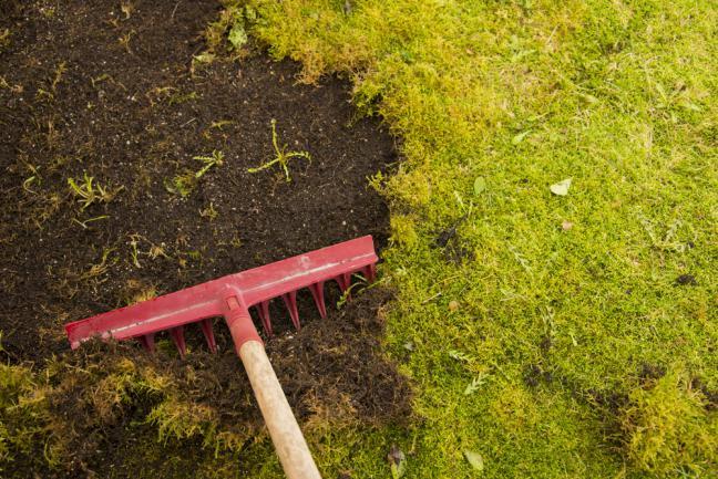 Enlever la mousse de la pelouse avec un râteau