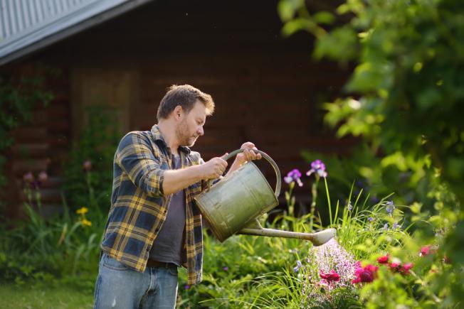 Entretien jardin iris
