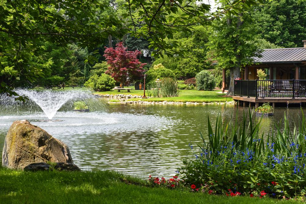 Étang de jardin avec jet d'eau