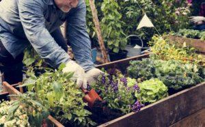Exemple d'association de plantes pour le potager