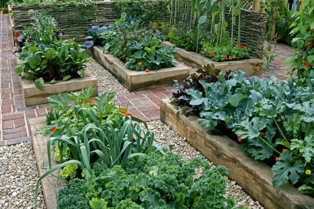 Exemple d'association de plantes pour un jardin facilement accessible aux enfants