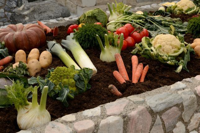 Exemple de disposition de légumes pour le concept d'assolement ou rotation de culture