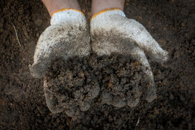Fertilité du sol de la pelouse