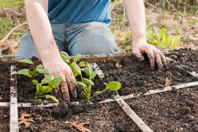 Fractionner le sol pour la rotation de culture