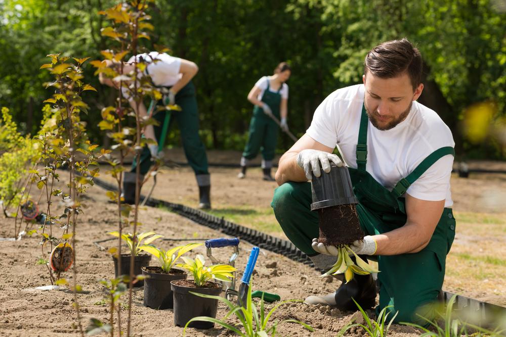 Groupe de jardiniers