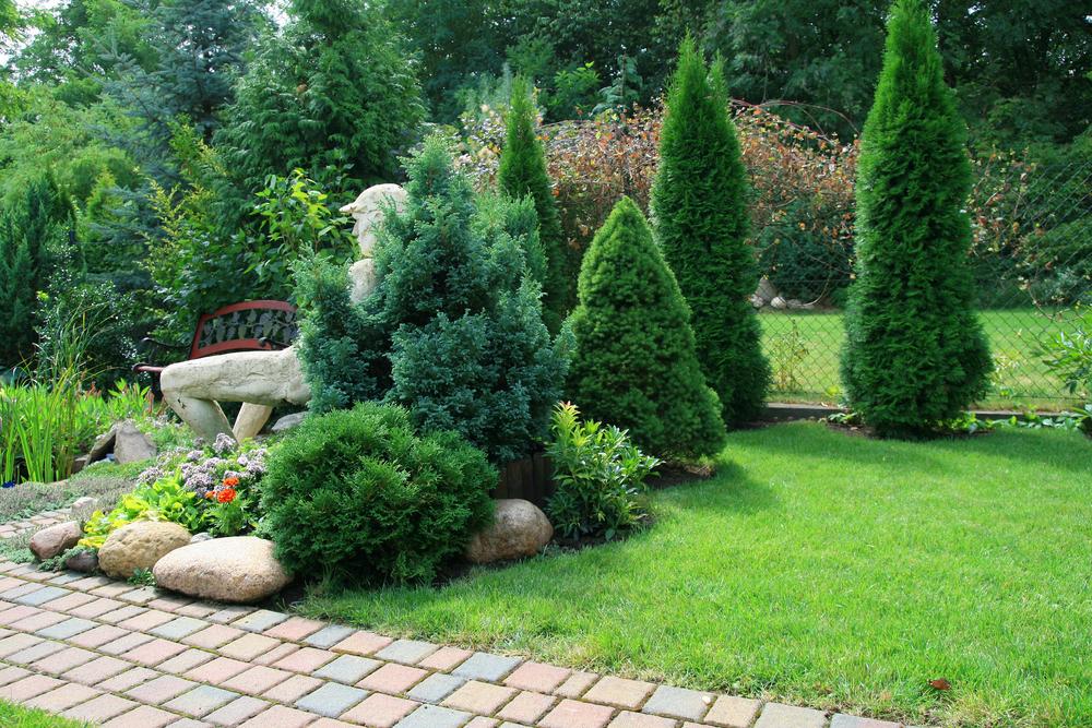 Jardin de conifères et pelouse