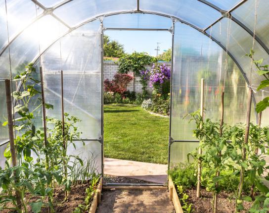 Légumes cultivées sous serre