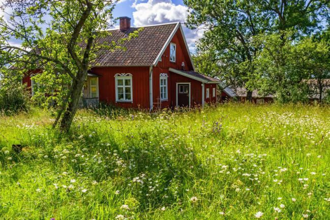 Maison et prairie fleurie