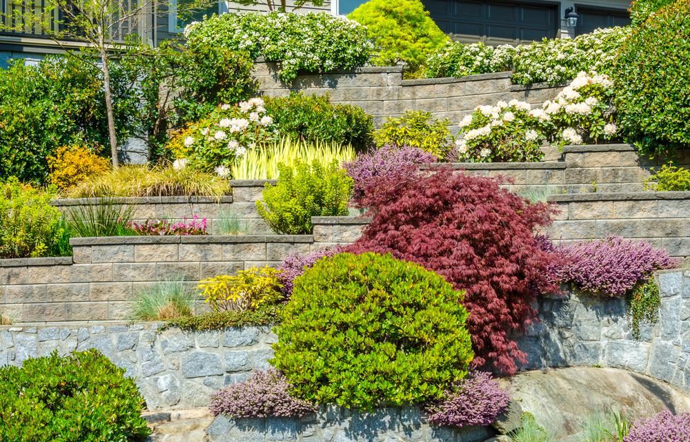 Plantes bien taillées et entretenues, cultivées en massif