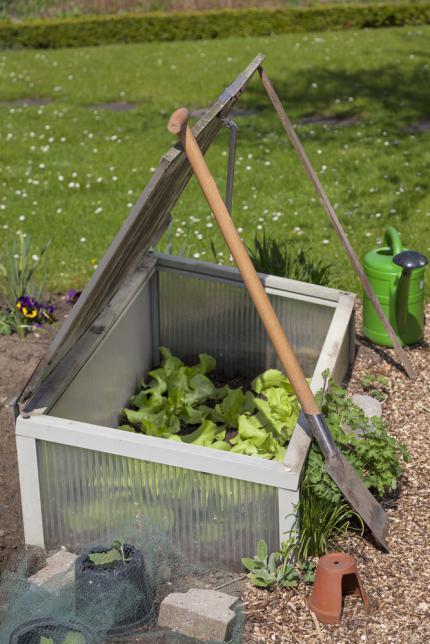 Mini-serre pour faire pousser la salade