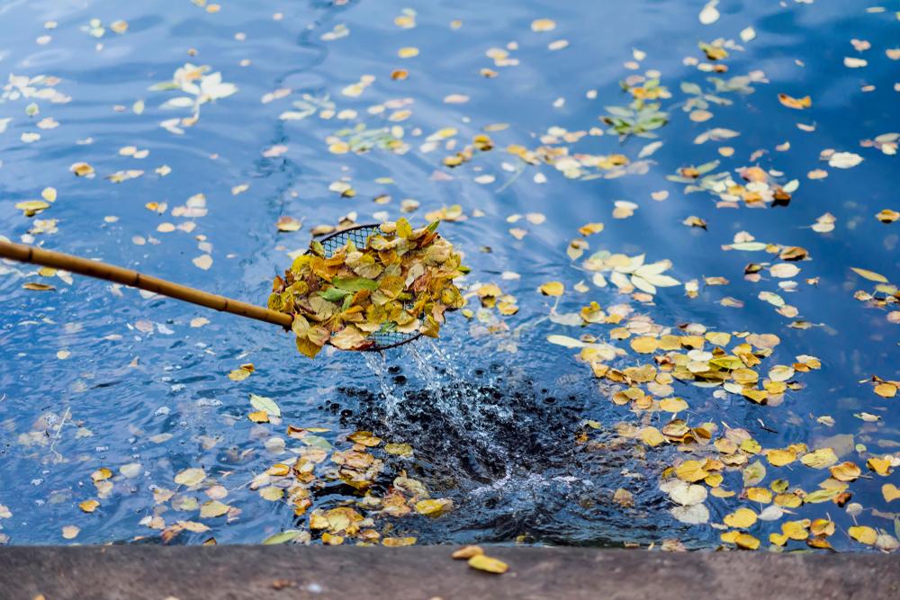 Nettoyage de l'eau à l'aide d'une épuisette