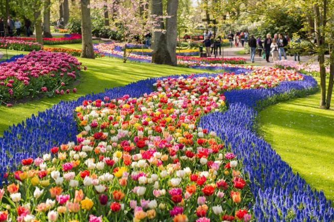 Parterre de tulipes - aménagement paysager