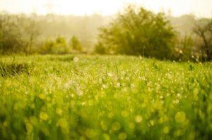 Pelouse écologique dans le jardin