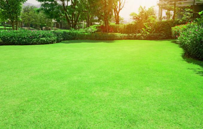 Pelouse lisse fraîchement entretenue pour un espace vert
