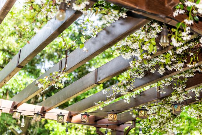 Plantes grimpant sur un patio en bois dans l'arrière-cour