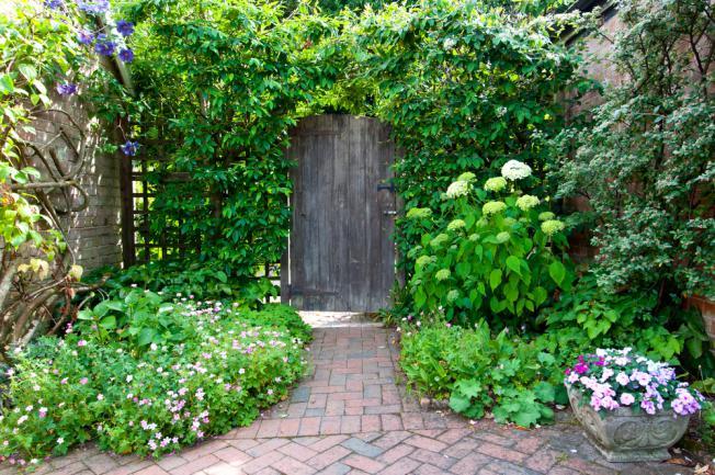 Plantes grimpantes a l'entrée du jardin