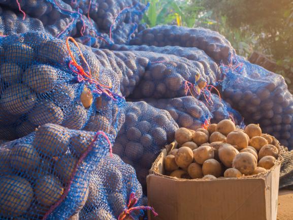 Pommes de terre conservées dans des filets