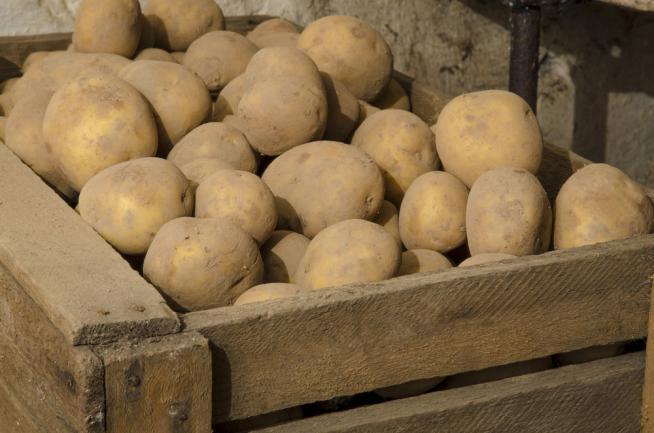 Pommes de terre conservées dans un caisson en bois