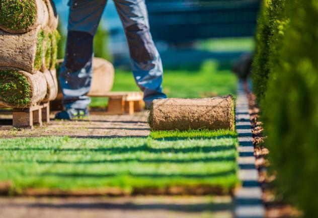 Pose de pelouse naturelle en plaques par un pro